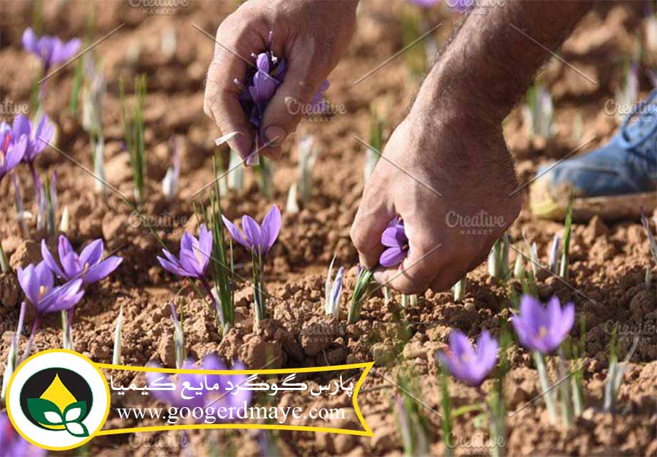 خرید گوگرد مایع برای زعفران
